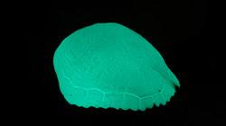 LumiLor Turtle Shell 2