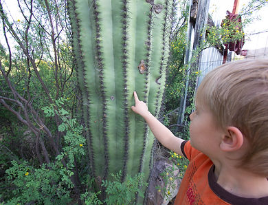 aug touching saguaro_edited.jpg