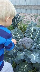 Aug broccoli.jpg