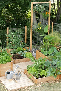 internet raised beds.jpg