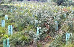 Natural area ecological restoration work