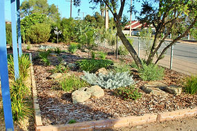 Low water use Australian native gardens to provide urban habitat