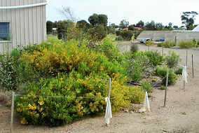 Vegetation community gardens to appreciate our natural heritage