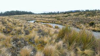 Endangered vegetation community restoration works