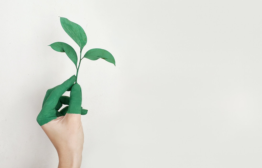 Hand, with fingertips painted green, holding a plant.