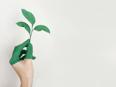 Recycled Capitalism: Greenwashing & Elitism in the Environmental Movement