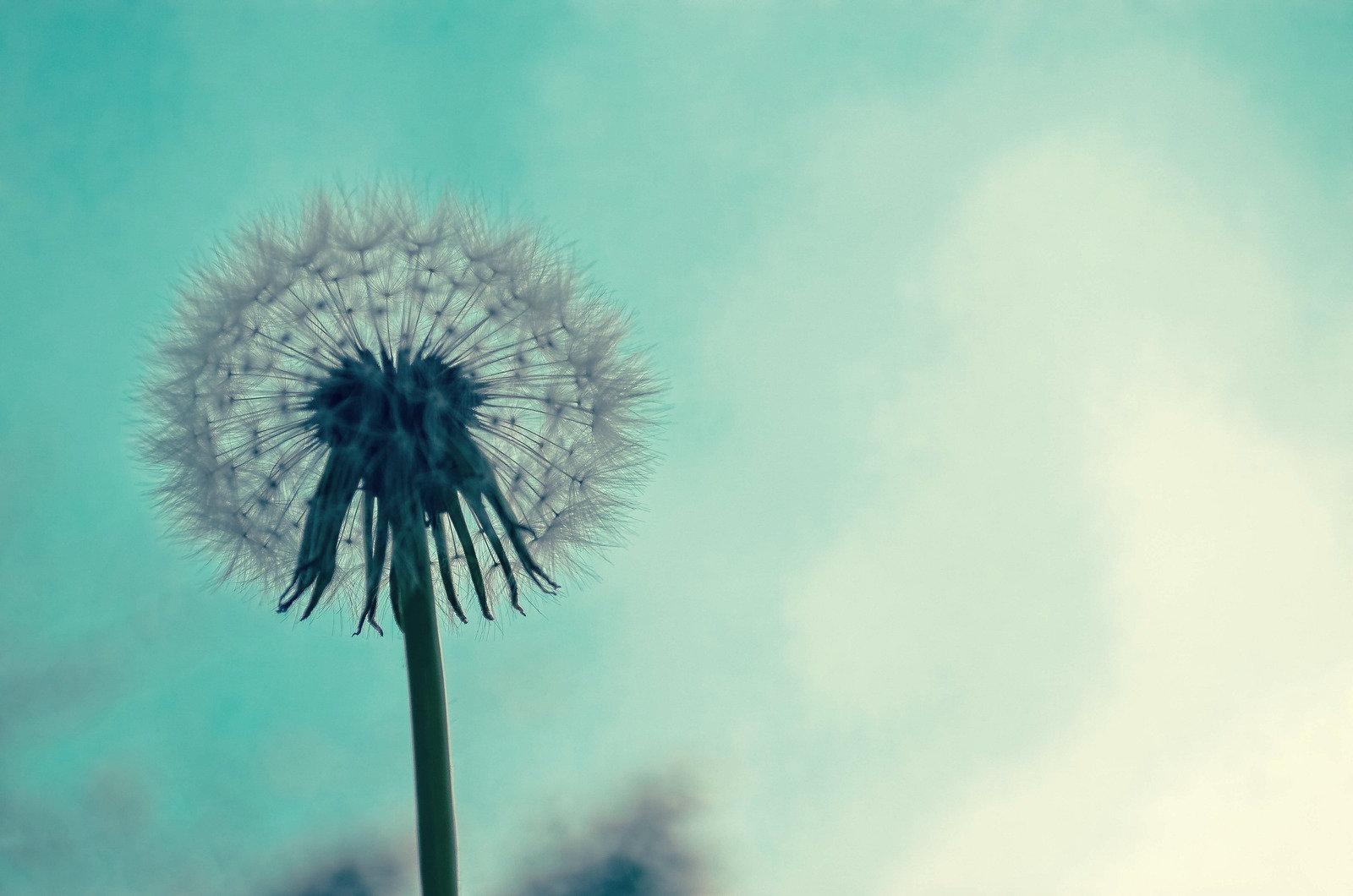 8-weken groepstraining Mindfulness