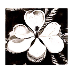 Charcoal Magnolia