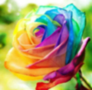 rose passion.JPG