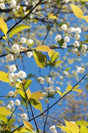 Bells Lee Garden.jpg