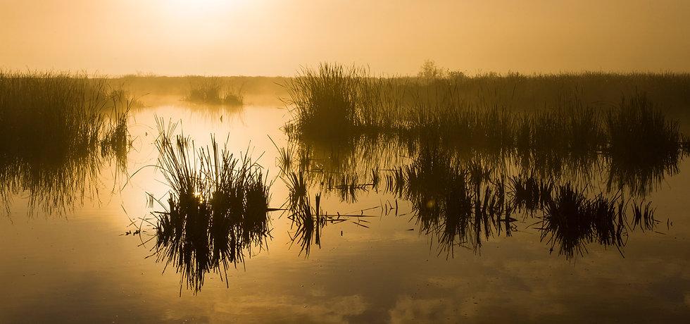 wetlands web.jpg