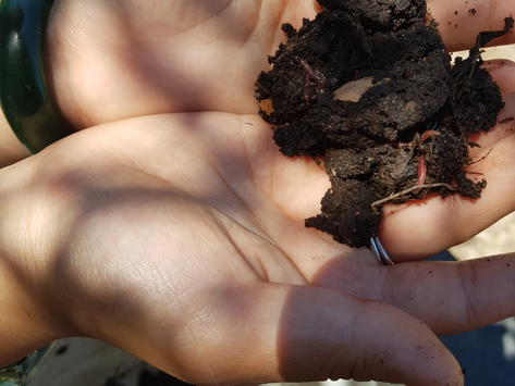 If You've Never Composted Before, This Is For You