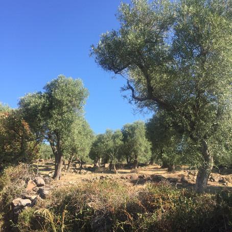 Miluju dobrý olivový olej