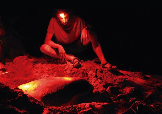 Observação de uma tartaruga a desovar. © Programa Tatô