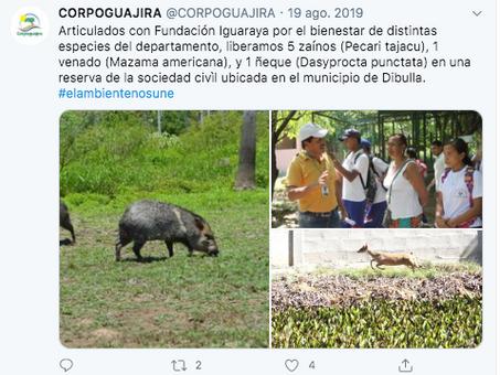 Liberación fauna