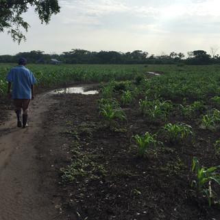 Agricultura_sostenible_1.jpg