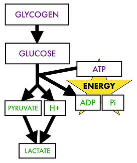 Glycolysis wihtout sufficient oxygen availability.