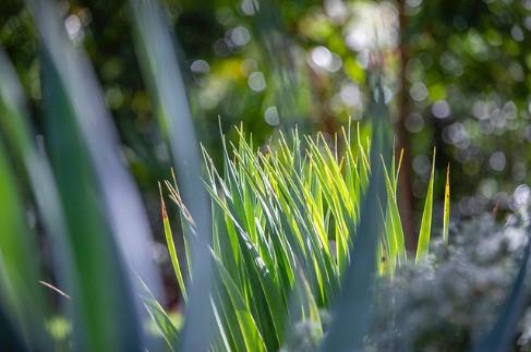 Joanne-green-landscape-designer-northern