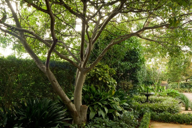 joanne-green-landscape-designer-sydney-t