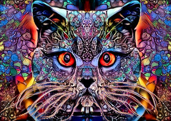 Mulicolour Cat.jpg