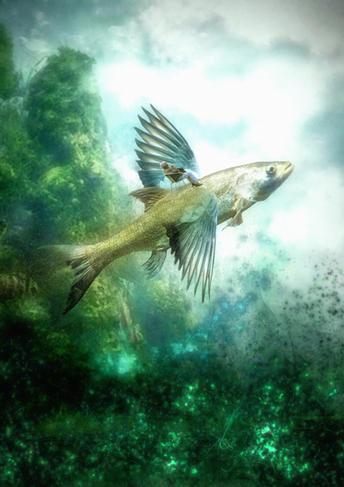 Fliegender Fisch klein.jpg