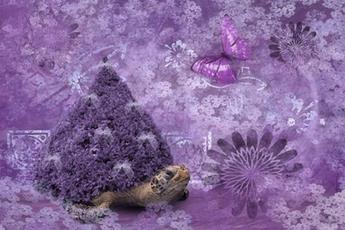 Purple and Turtle.jpg