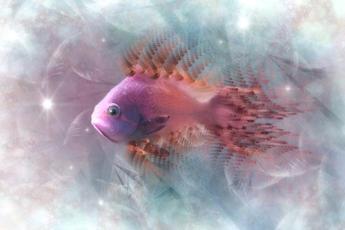 Dezemberfisch.jpg
