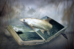 A book of water