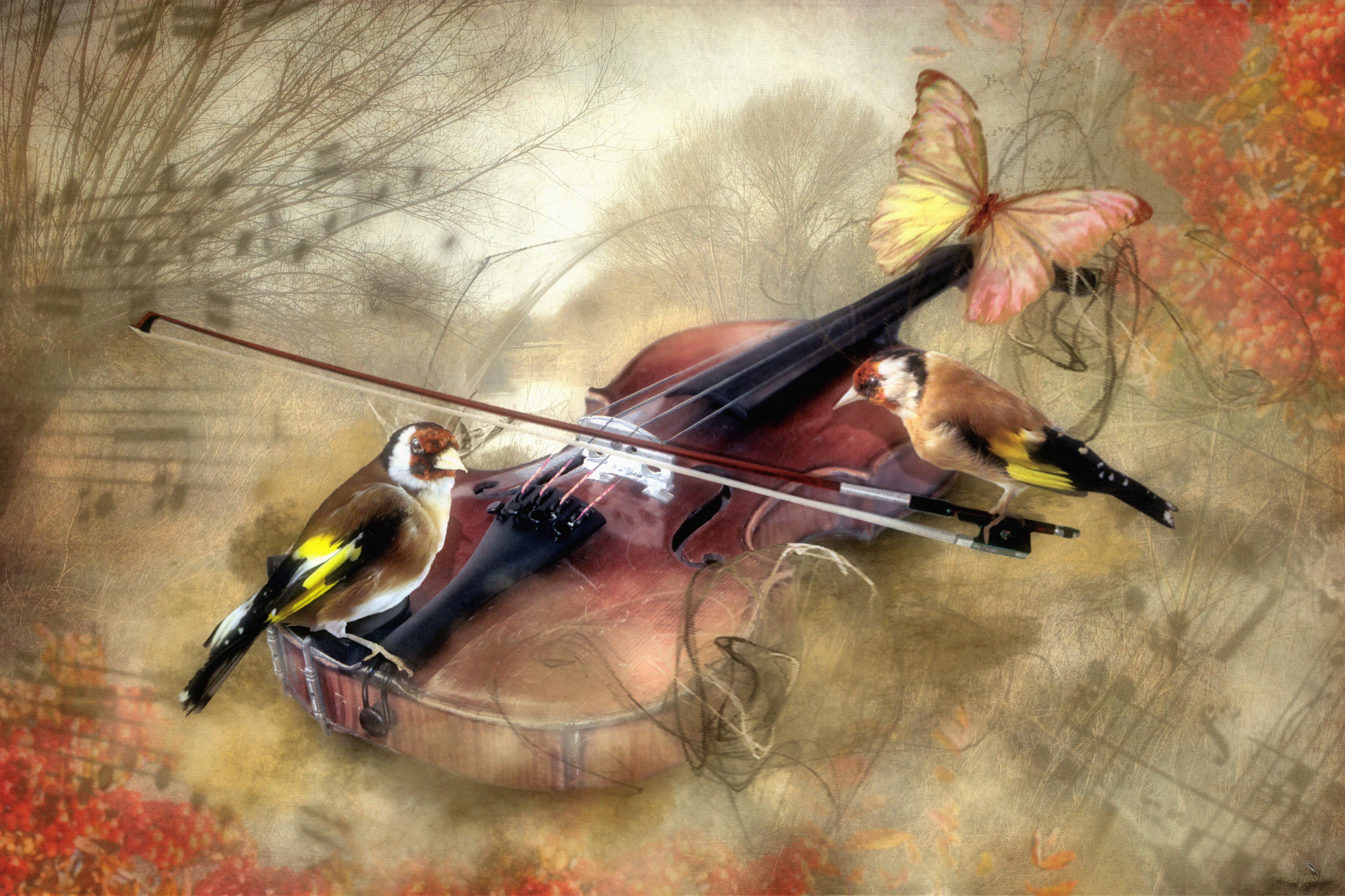 Violinpfeifer von Stieglitz