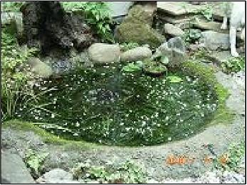 池①.png