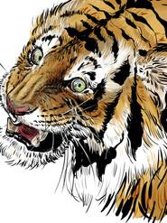 Ink tiger, 2019