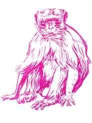 Pink Macaque, 2018