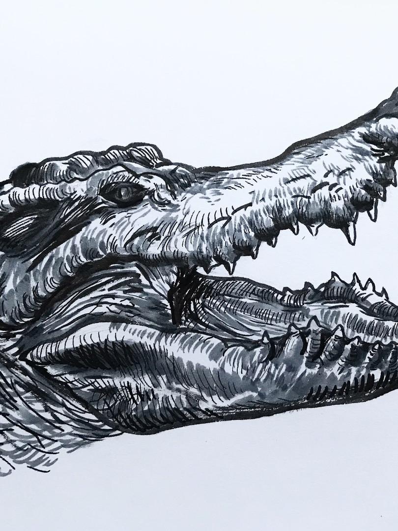 Siamese Crocodile, 2019
