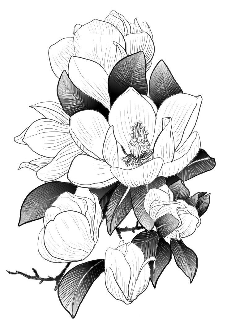 magnolia nr 2