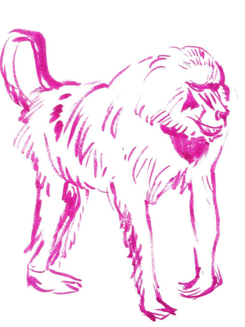 baboon in ink, 2018