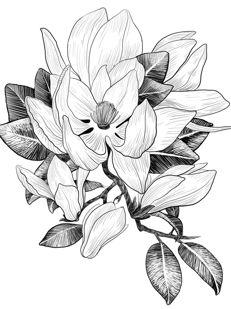 Magnolia nr 1