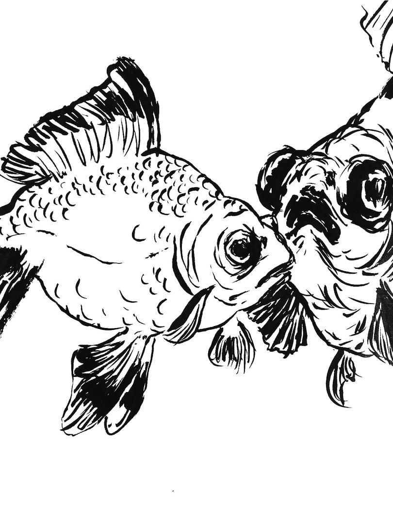 gold fish, 2016