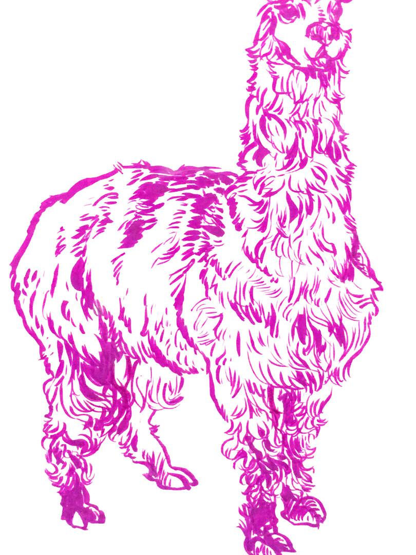 Alpaca in ink, 2018