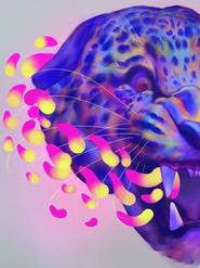 Rainbow Jaguar, 2019