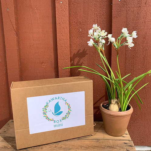 Spring Kawartha Box Mini