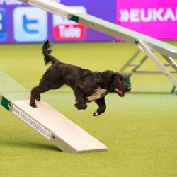 willow crufts 2