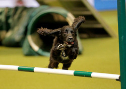 willow crufts