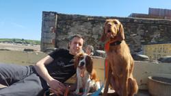 pub dogs 2