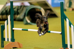 willow crufts 4