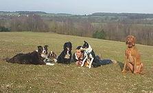 Olivr anddogs at Lullingstone