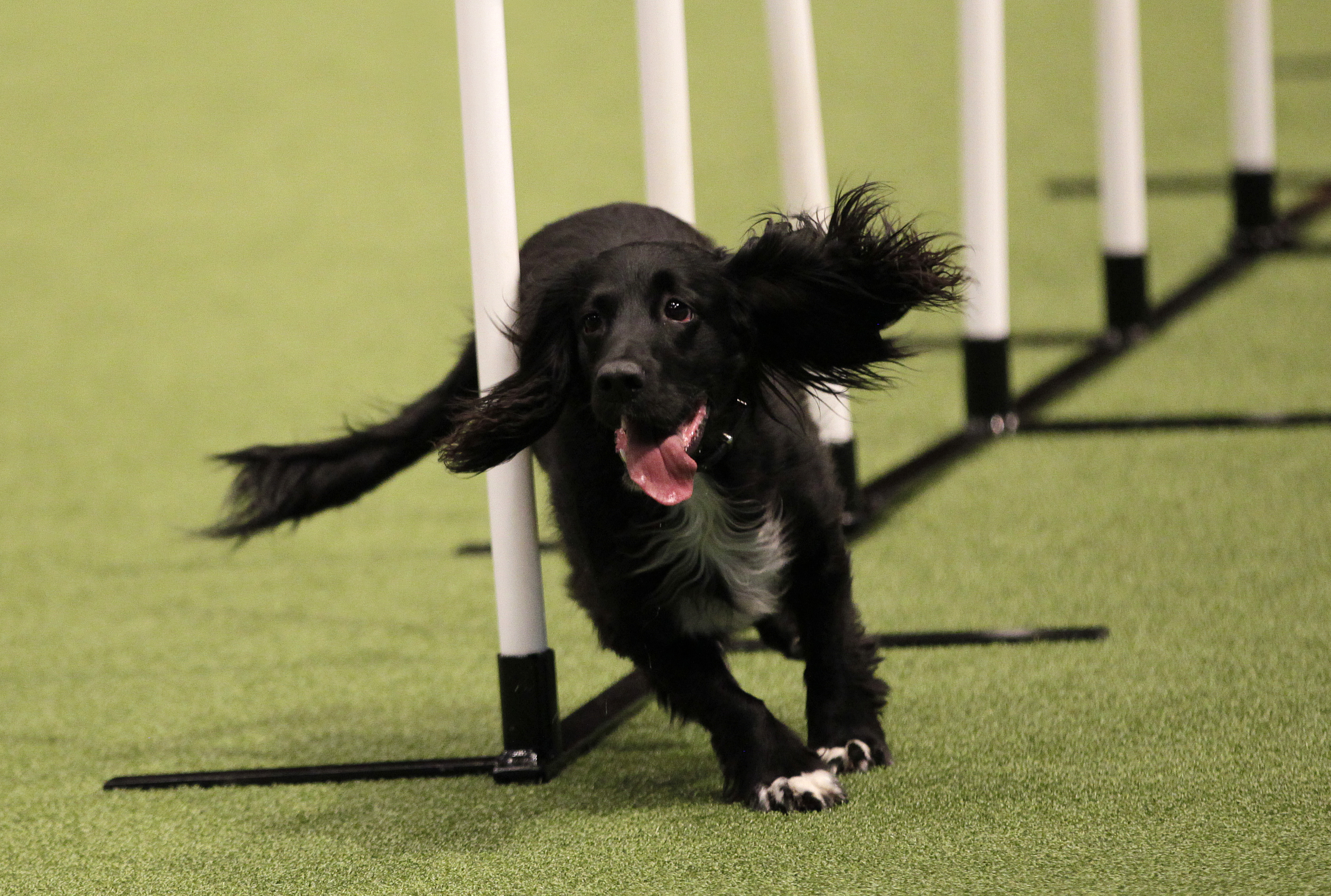 willow crufts 3
