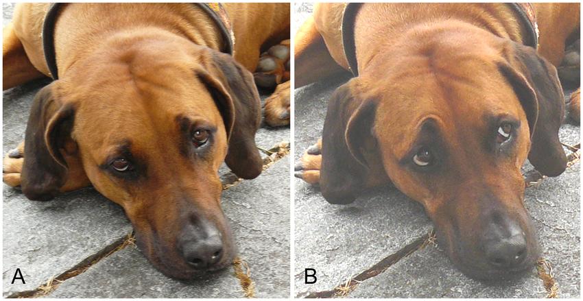 AU101 Dog FACS image