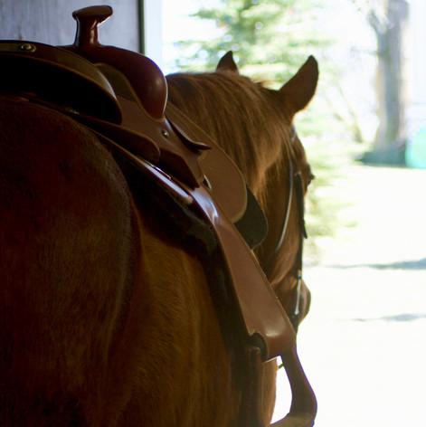Therapeutic riding