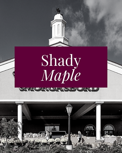 SHADY MAPLE.png