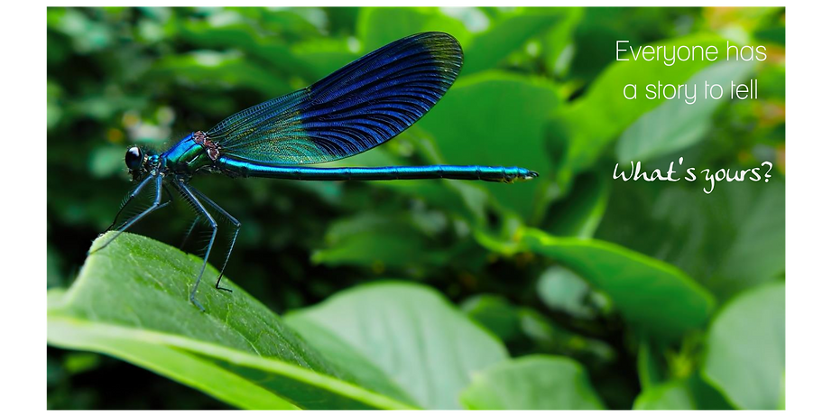 dragonfly branding content strategy creativity